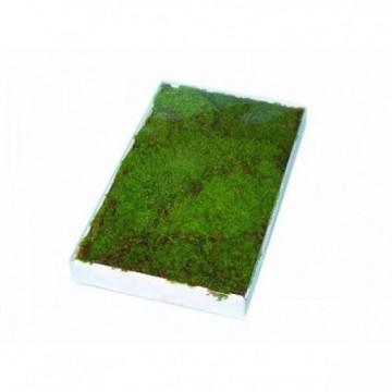 6,6x6,5 Elica speed prop